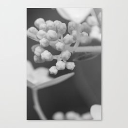 Soft Stages no. 3 Canvas Print