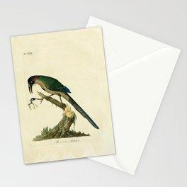 John Latham - A General History of the Birds, Vol 2 (1821) - Plate 31: Brazilian Motmot Stationery Cards