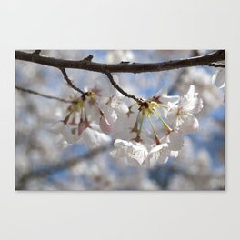 Ivory No. 01 Canvas Print