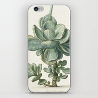 succulent iPhone & iPod Skins featuring Succulent by anipani