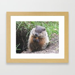 baby woodchuck solo Framed Art Print