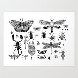 Bug Board Art Print