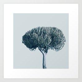 Monochrome - Candelabra tree Art Print