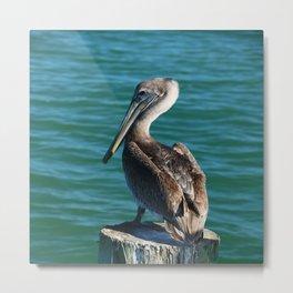 Pelican On A Pole Metal Print