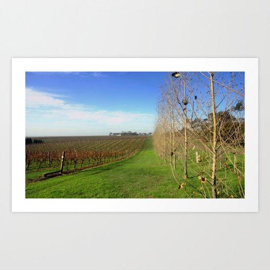 Grapevines  Art Print