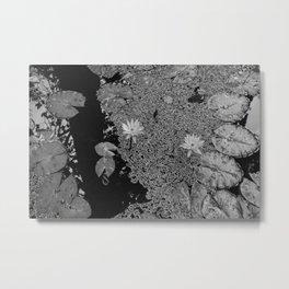 Black and White Lily Pond Metal Print