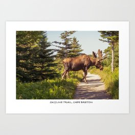 Skyline Trail, Cape Breton Art Print