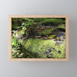 Rainforest Ferns & Moss Framed Mini Art Print