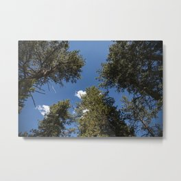 Angelus Oaks Forest and Sky Metal Print