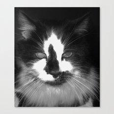 Blott - Kitty Cat II Canvas Print