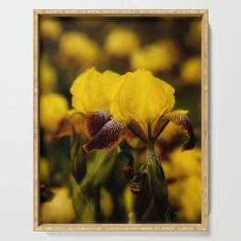 Yellow and Maroon Irisis Serving Tray