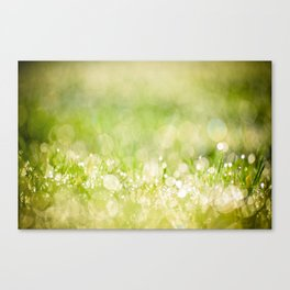 morning dew no.2 Canvas Print