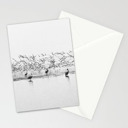 Flock of Terns and Pelicans in the Florida Bay Stationery Cards