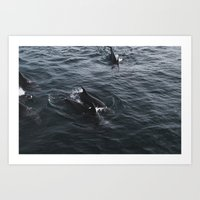 Dolphins at the Bay of Islands, New Zealand Art Print