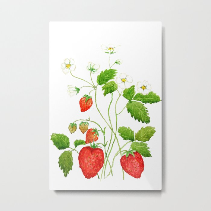 strawberry and strawberry flowers watercolor painting Metal Print