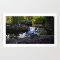 pigeon Art Prints featuring Pigeon by Elliott Kemp Photography