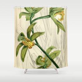 Cymbidium iridioides Shower Curtain