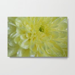 Yellow and Mellow Metal Print