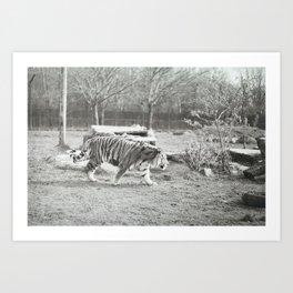 On the prowl... Art Print