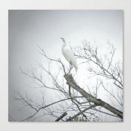 Egret, 2011.  Schriever, LA Canvas Print