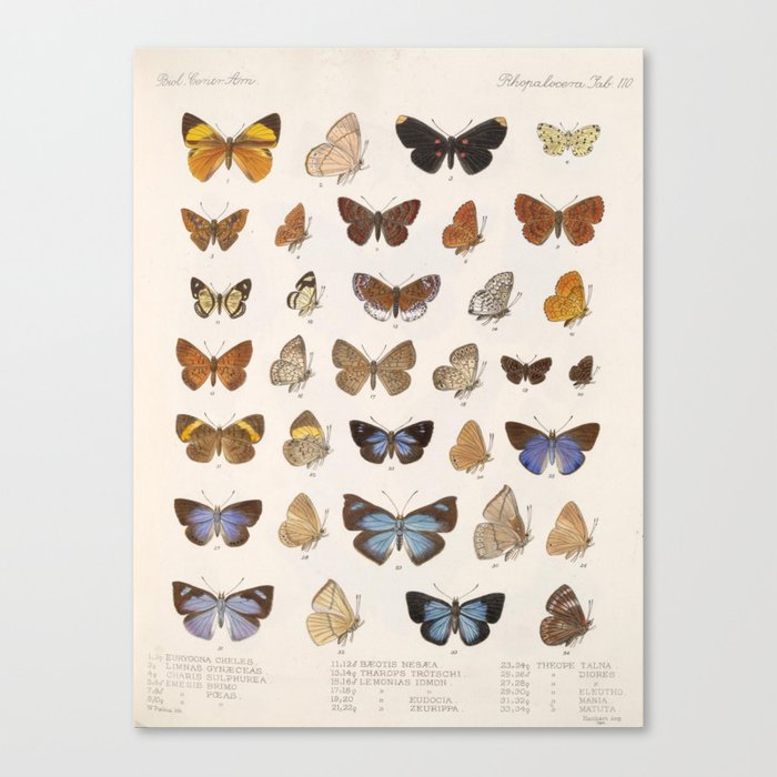 Vintage Scientific Insect Butterfly Moth Biological Hand Drawn Species Art Illustration Leinwanddruck