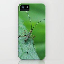 Baby Katydid iPhone Case