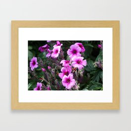 Beauty on The Rock Framed Art Print