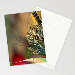 Butterfly - Caligo memnon Stationery Cards