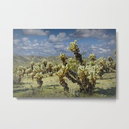 Cactus called teddy bear cholla No.0265 Metal Print