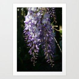 Wisteria With Garden Background Art Print