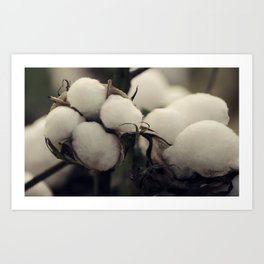 Cotton Field 7 Art Print