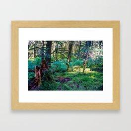 Tree Stump in the Woods Framed Art Print