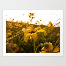 There exists little in this world finer than flowers in the spring Art Print