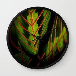 The prayer plant - Maranta photography for botanic lovers Wall Clock