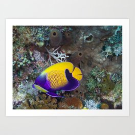 Yellow and purple damsel fish Art Print