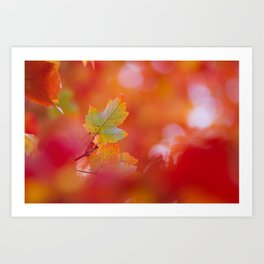 Green in a Sea of Red Art Print