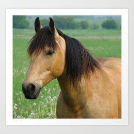 Buckskin Quarterhorse in Summer Art Print