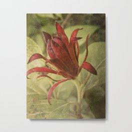 Carolina Allspice Metal Print