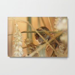 harvest mouse Metal Print