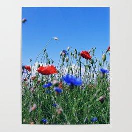 poppy flower no12 Poster