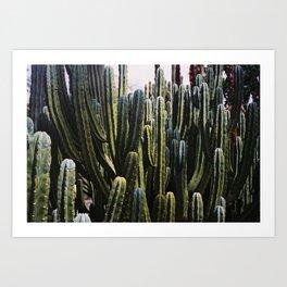 Cacti in Marrakech Art Print