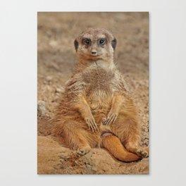 Funny Meerkat Canvas Print