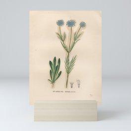 Flower scabiosa canescens2 Mini Art Print