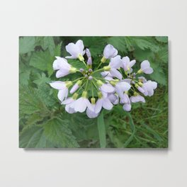 little purple flowers Metal Print