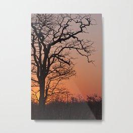 Skeleton tree in an African sunset Metal Print