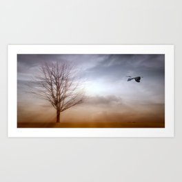 White Faced Heron In Flight Art Print