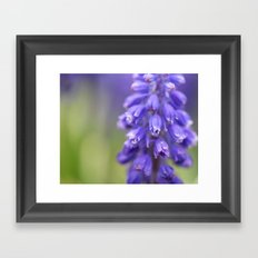 Violet Buds Framed Art Print