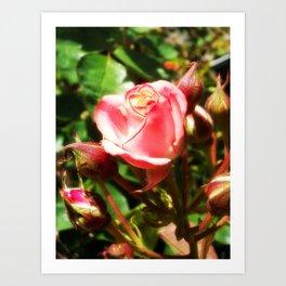 Natural Beauty • Point Defiance Rose Gardens • Tacoma, WA Art Print