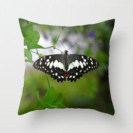 Butterfly Medium Throw Pillow