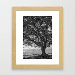 Sarasota Bayfront 2 Framed Art Print